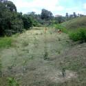 reflorestamento3