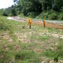 reflorestamento5